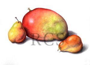 mango-pears copy