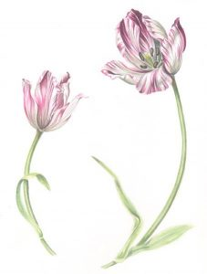 tulip-paint