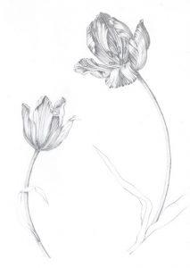 tulip-pencil